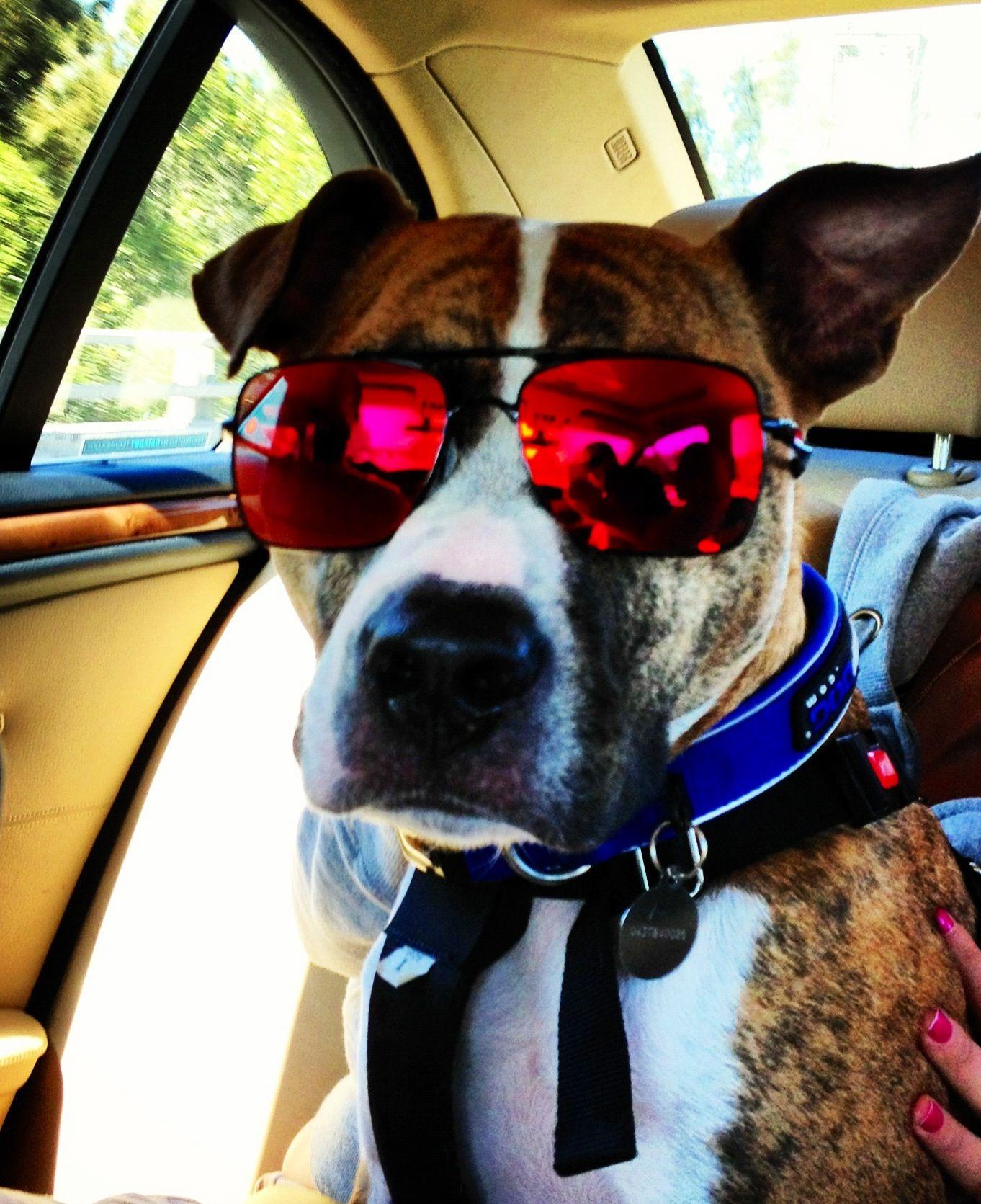 Cool pup Ralph