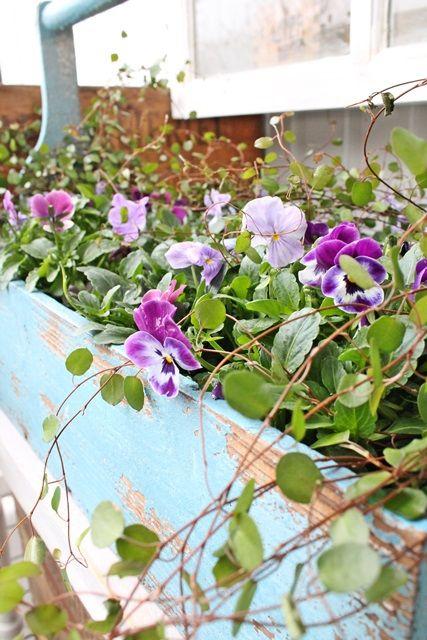 I min B LÅ  kasse har det nå blitt plantet stemor i de skjønneste blå/lilla toner .Helt herlig er det å leke seg med floraens farger på d...