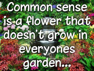 common sense, why is it in such short supply?