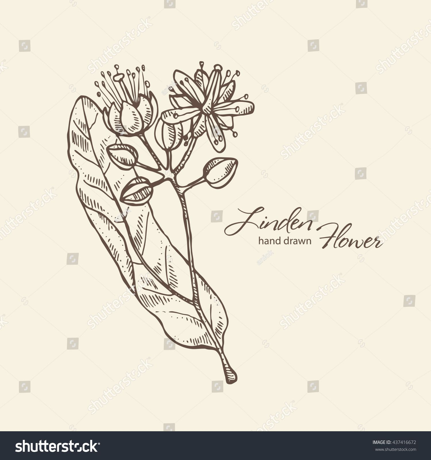 Background With Linden Flower Hand Drawn How To Draw Hands