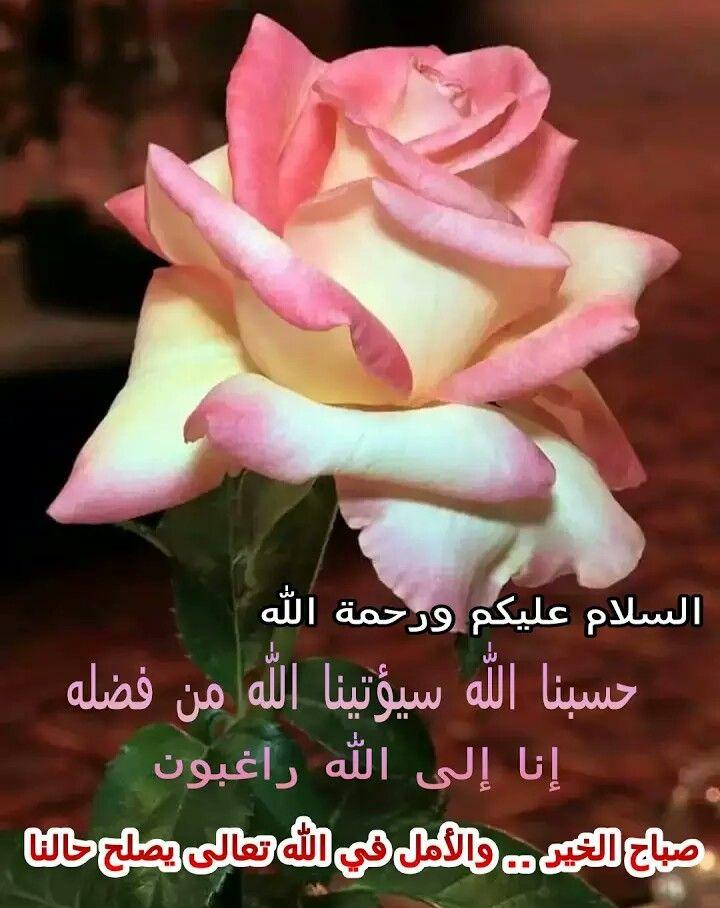 حسبنا الله سيؤتينا الله من فضله إنا إلى الله راغبون Rose Flower Beautiful Flowers Beautiful Roses