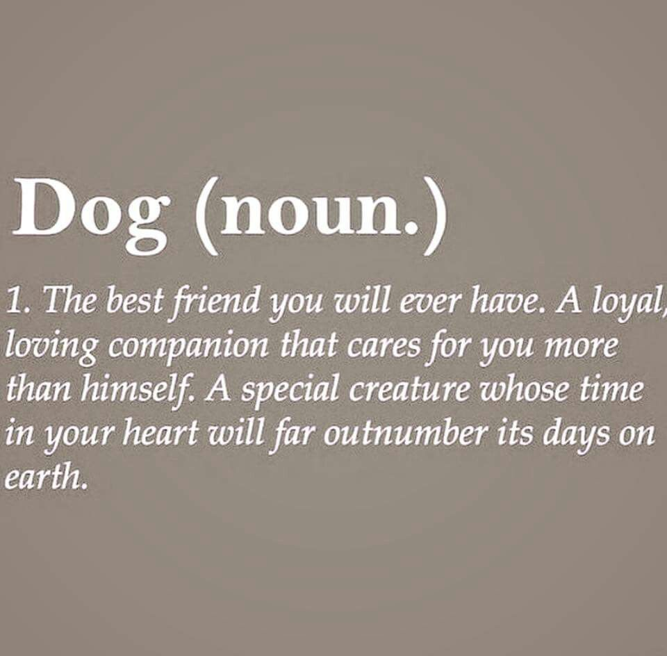 The Best Quotes Amusing In Memory Of My Best Friend Cyrus  Doggies  Pinterest  Dog . Inspiration Design