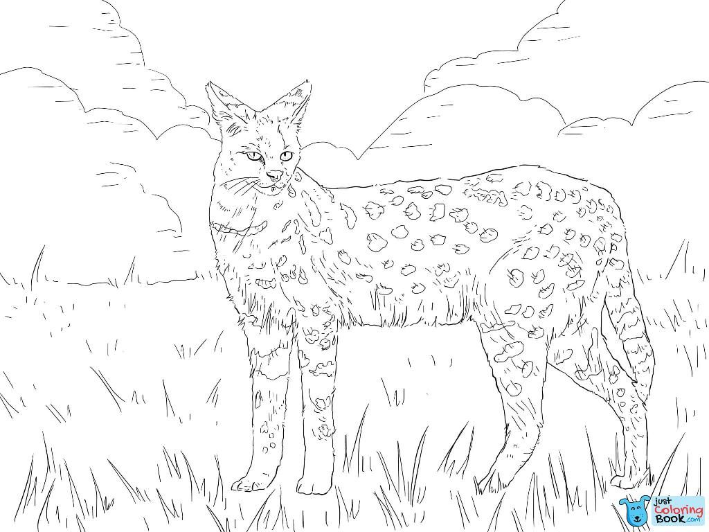 Serval African Wild Cat Coloring Pages With Images Cat