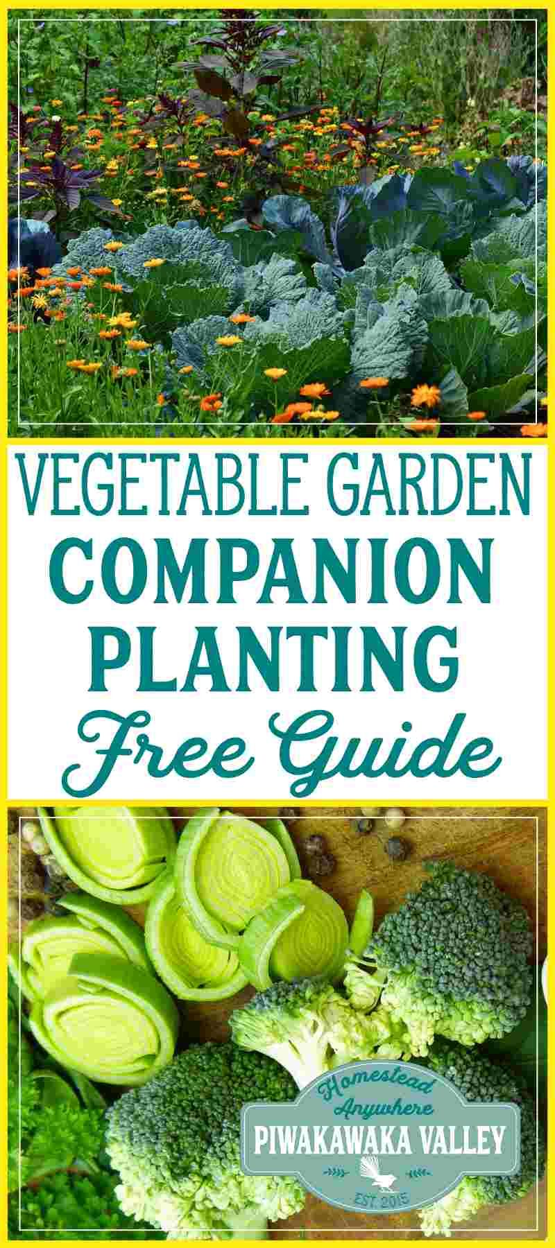 Companion Planting Chart for Vegetables and Herbs