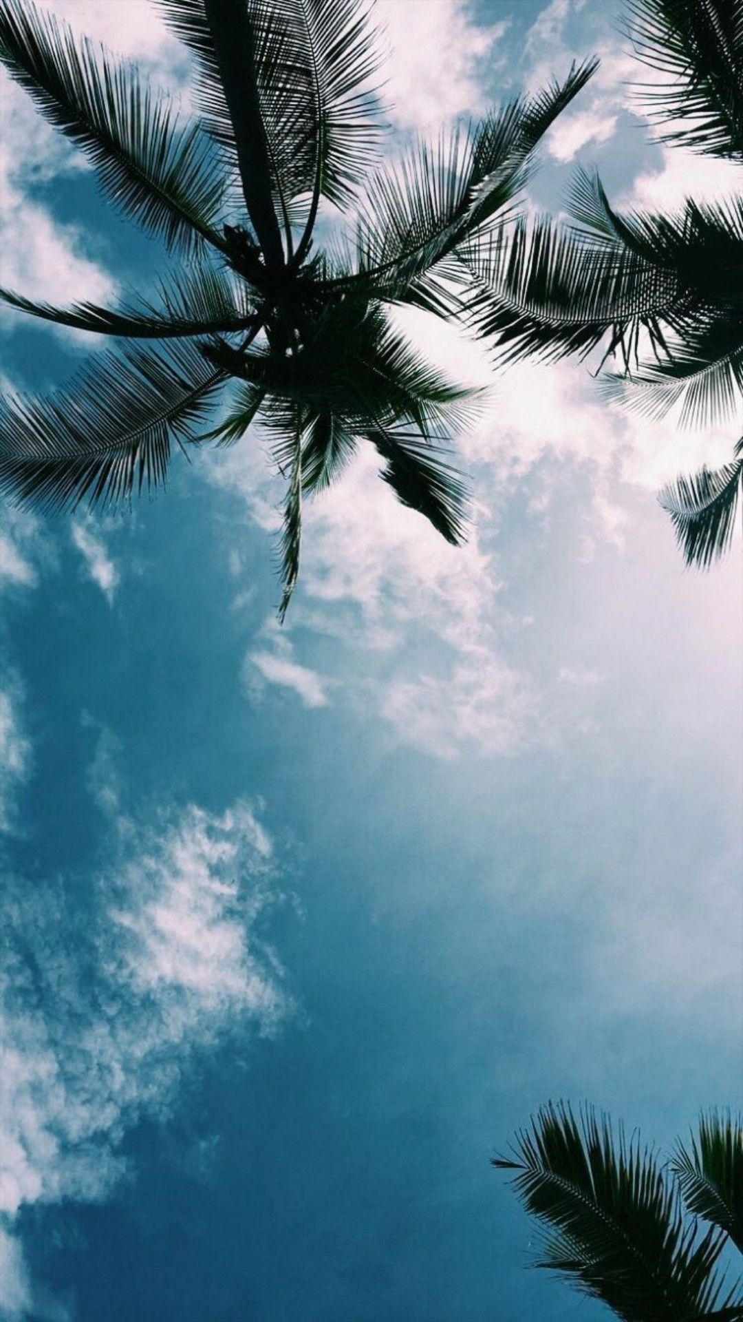 Sky Tree Nature Blue Daytime Palm Tree Photography Wallpaper Blue Wallpaper Iphone View Wallpaper Wallpaper palm trees on blue sky