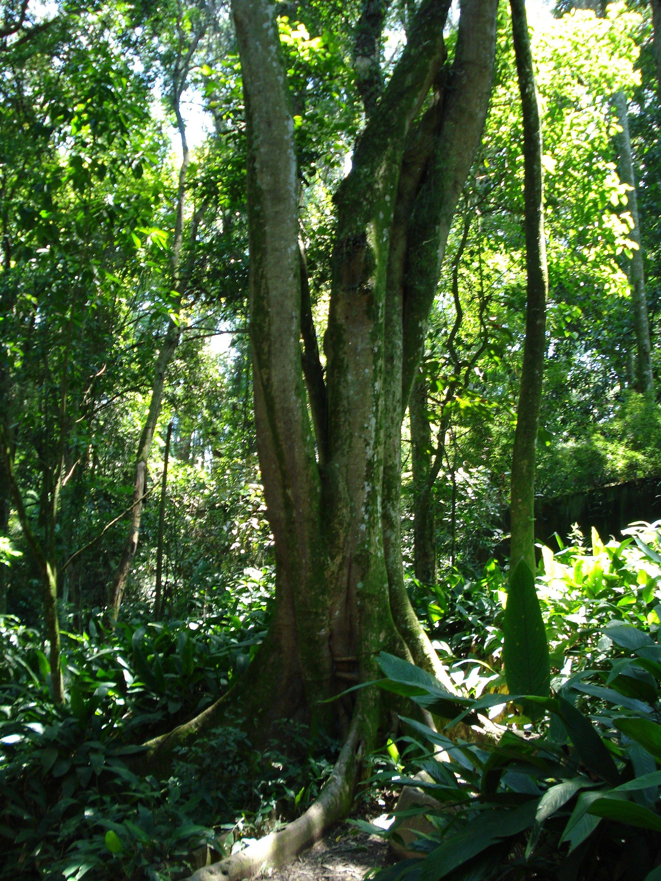 Wonderful Tree...