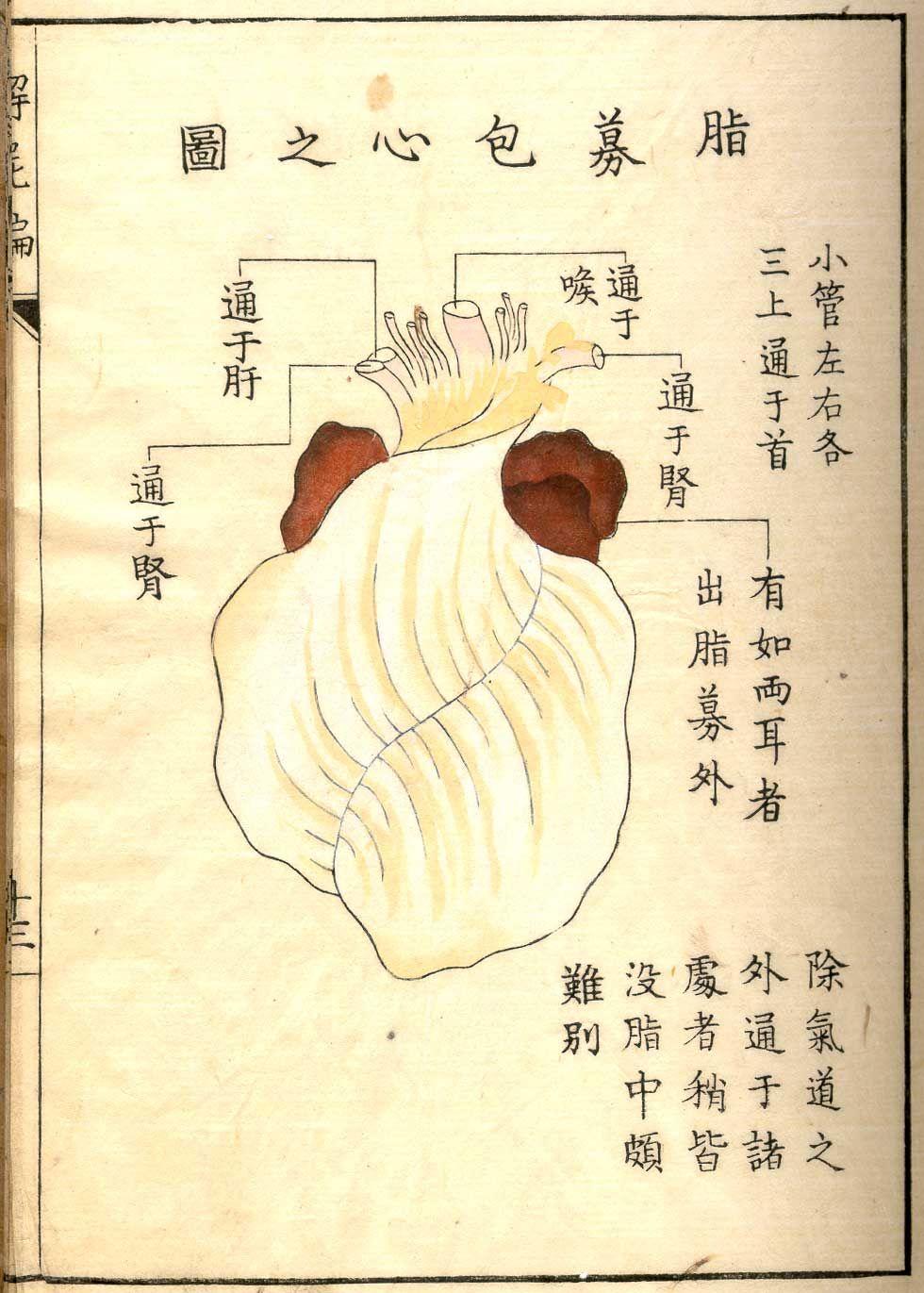 Heart in pericardium, from Shinnin Kawaguchi\'s Kaishi hen, NLM Call ...