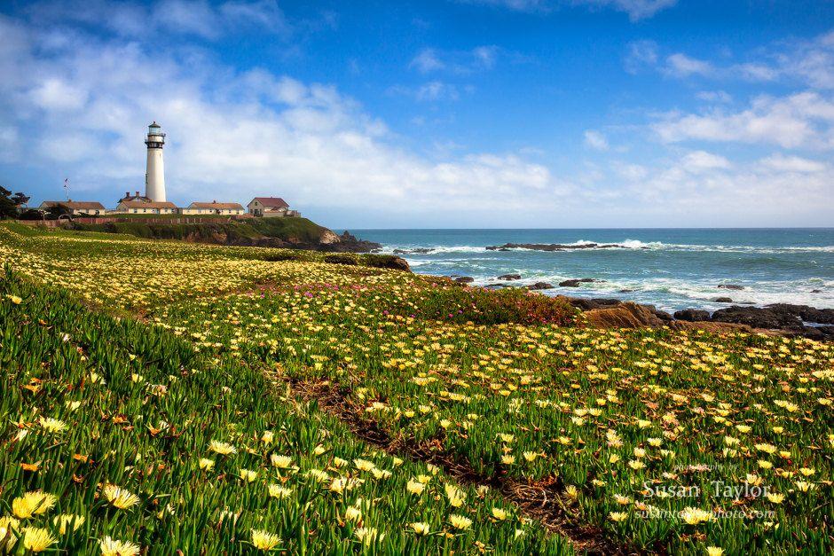California Coast Art, Floral Print, Lighthouse, Seascape Flower ...