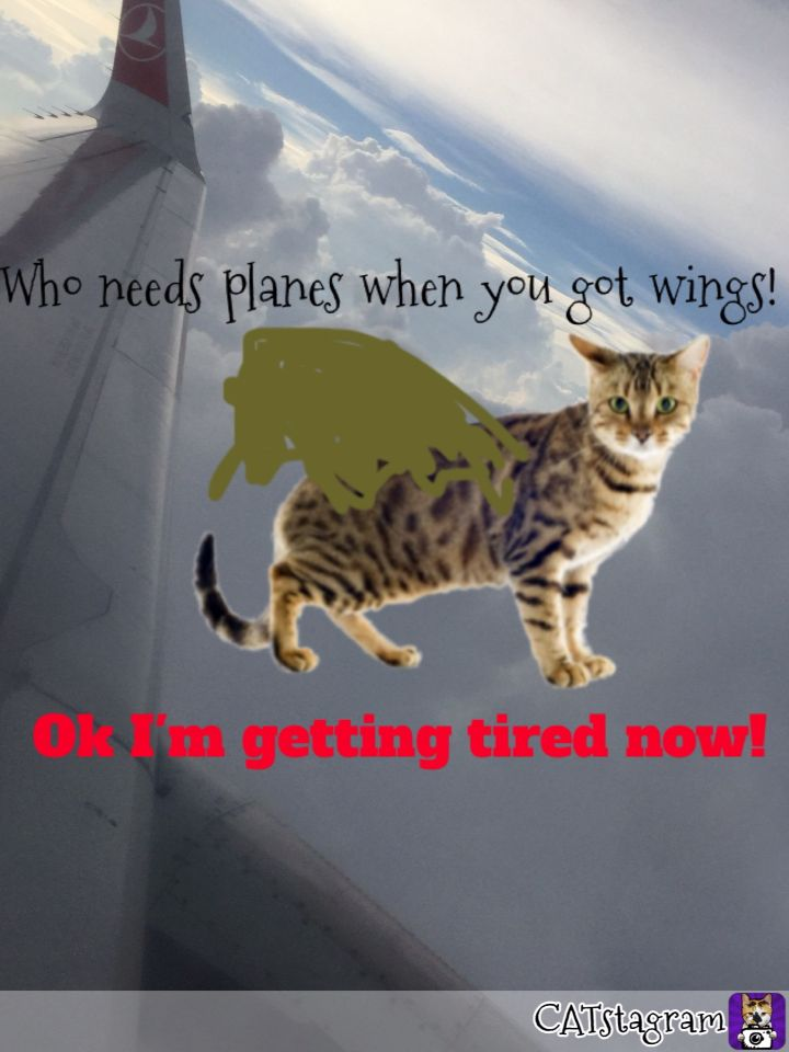 Awsome flying kitteh!    With short stamina