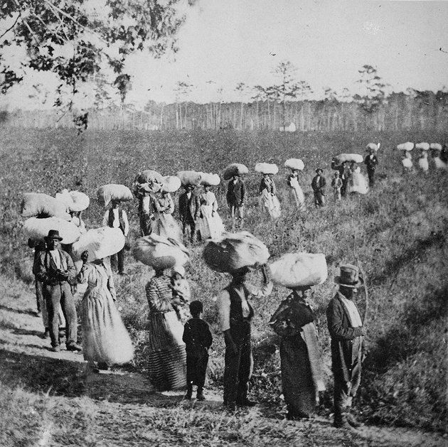 Slaves returning from a cotton field in the American South