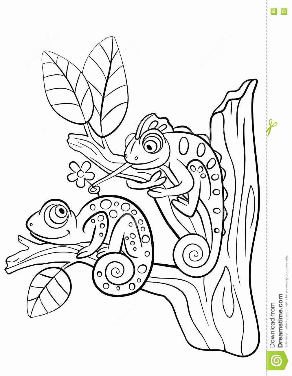 Animal Coloring Book Games Beautiful Coloring Pages Wild Animals Two Little Cute Chameleons