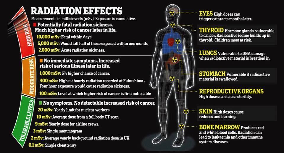 Radiation Effects Nuclear Radiation Radiation Exposure Radiation Dose