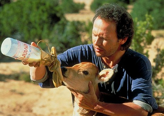 Norman The Calf Pretty Much The Main Reason I Watched City Slickers City Slickers Old Movies Billy Crystal