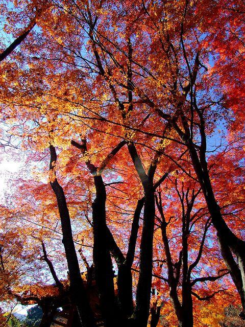 秋の色 | Flickr - Photo Sharing!
