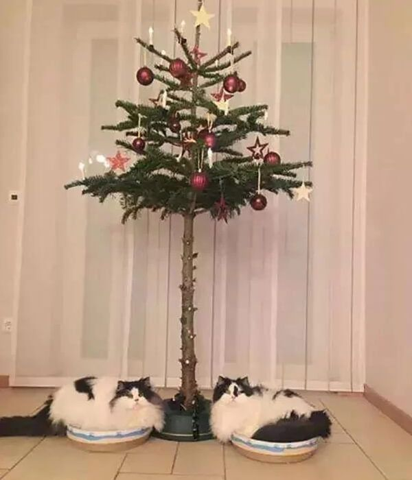 Keep Cat Away From Christmas Tree: LOL!!How To Keep Your Pet Away From The Christmas Tree