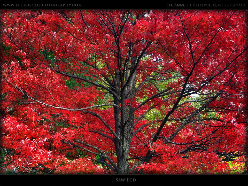 I Saw Red Di Fruscia Photography Quebec Canada Beauty Of Fine Art Nature And Landscape Photography G Landscape Photography Nature Art Nature Photography