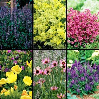 All summer flowering perennials biography while land plants have all summer flowering perennials biography while land plants have existed for about 425 million years mightylinksfo