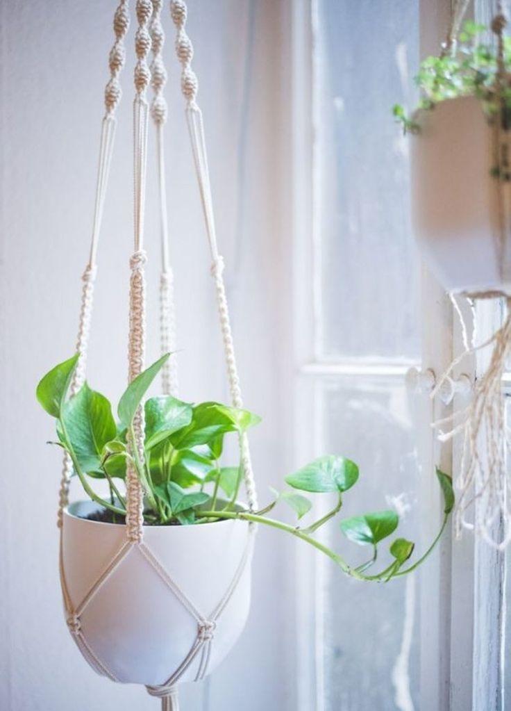 Photo of Indoor Garden: Warum wir Planzen jetzt lieber aufhängen