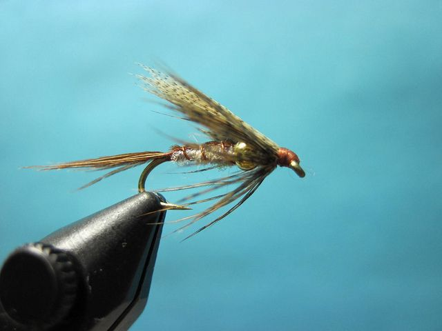 High water usually coincides with the March Brown emergence on the Mckenzie and Willamette Rivers near Eugene. One of our favorite methods to catch trout during the emergence is to swing one or two wet flies on a floating line and a 9-10ft leader. Many traditional wets can work, Coachman Wet, Dark Cahill, Hare's Ear Soft Hackle and Pheasant Tail Soft Hackle to name a few. But when you need that wet to stay down as it swings across that fast edge or riffle give the Hidden Bead March a go.