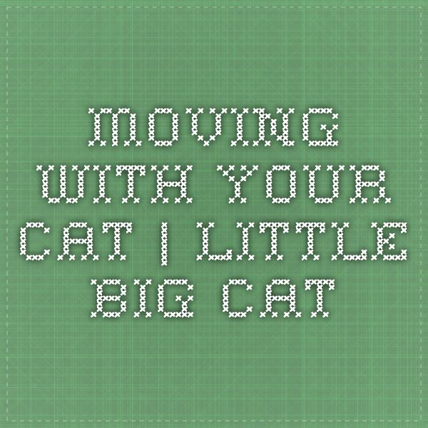 Moving with Your Cat | Little Big Cat