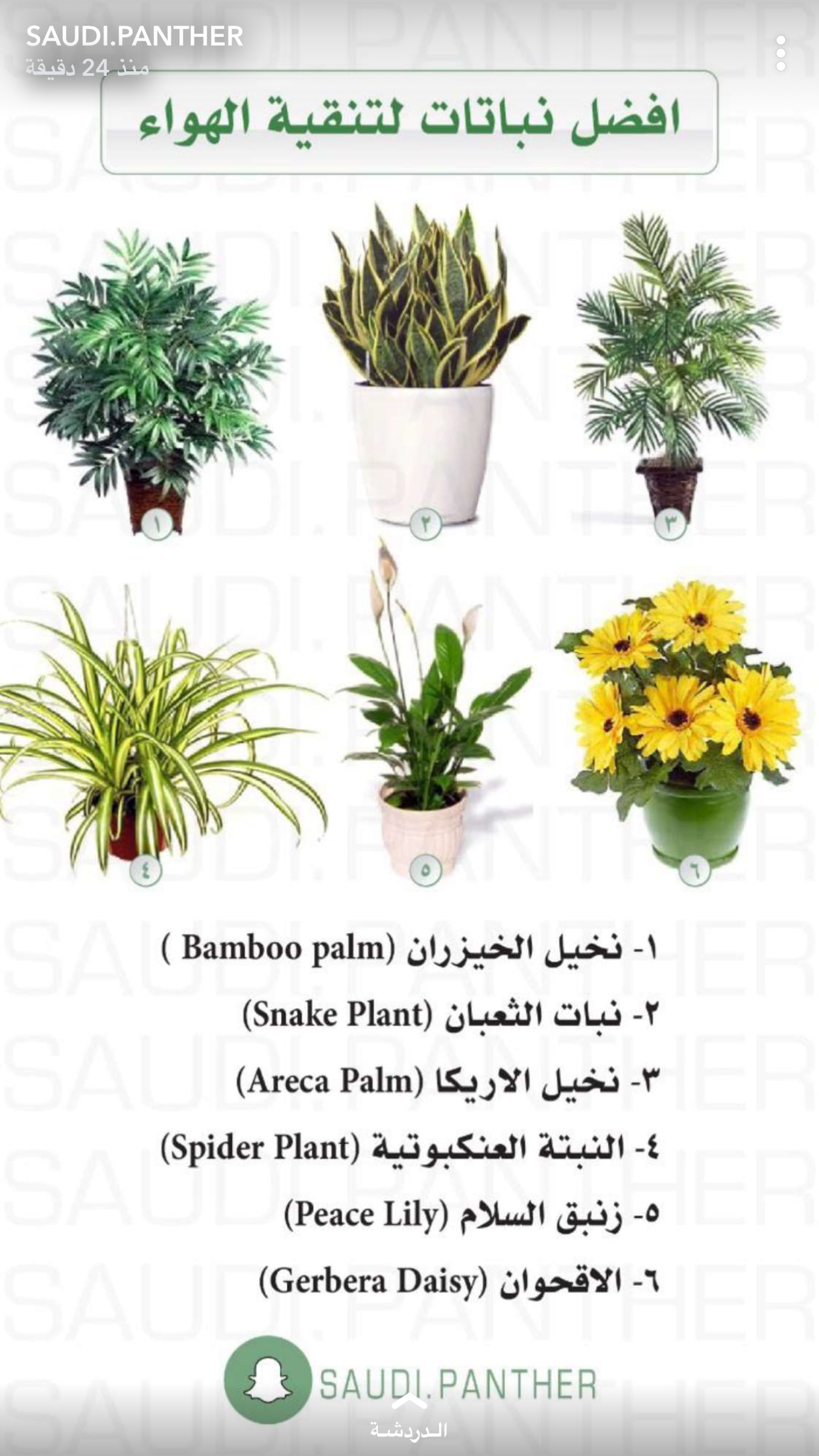 Pin By Maryam On Farming Plant Decor Plants House Plants Decor