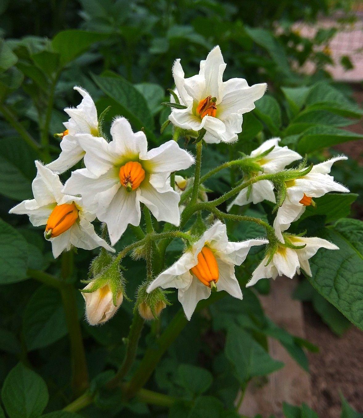 Pin Auf Flores