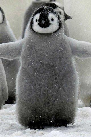 Ces bébés animaux sont tellement mignons quils vont vous faire craquer !