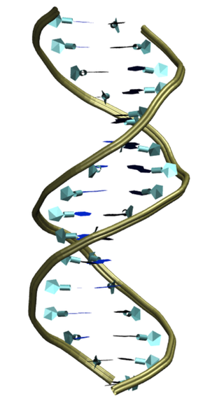 Dna Flexibility At The Atomic Scale Dna Molecule Dna Genetics Dna
