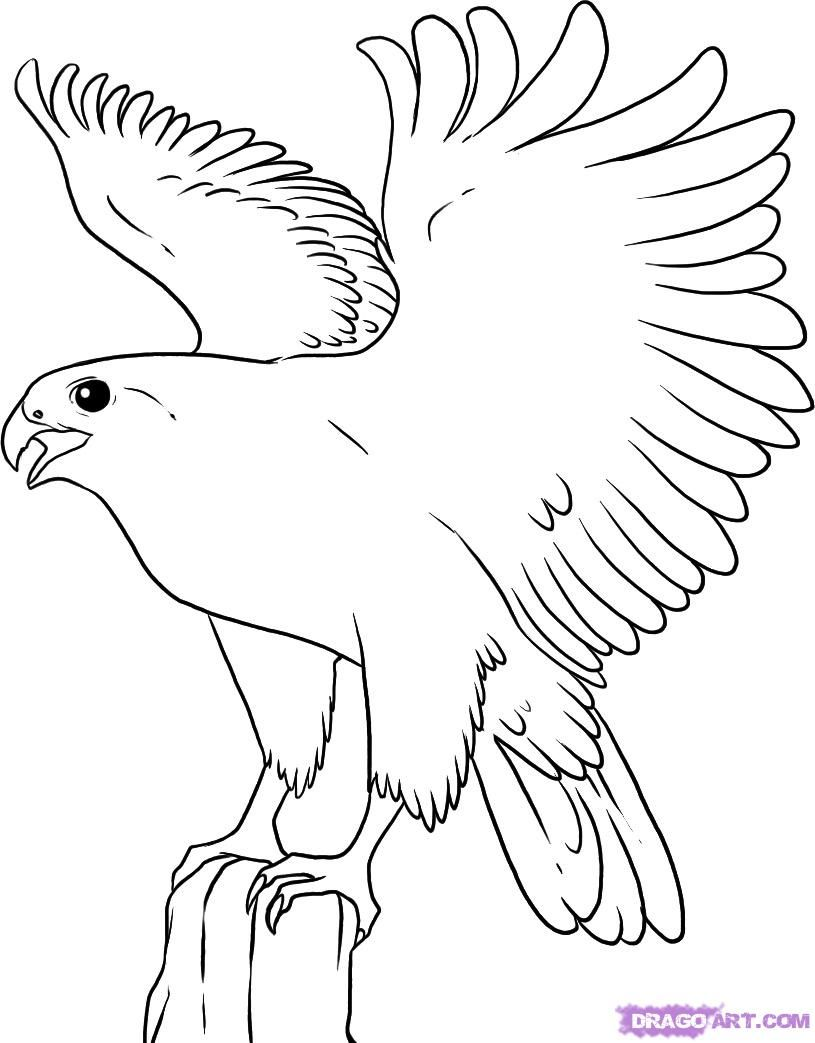 How To Draw A Falcon By Dawn With Images Bird Coloring Pages