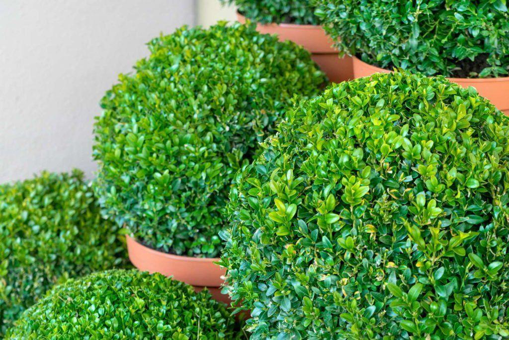 Winterharte Kubelpflanzen Unsere Top 15 Plantura In 2020 Kubelpflanzen Winterhart Pflanzen