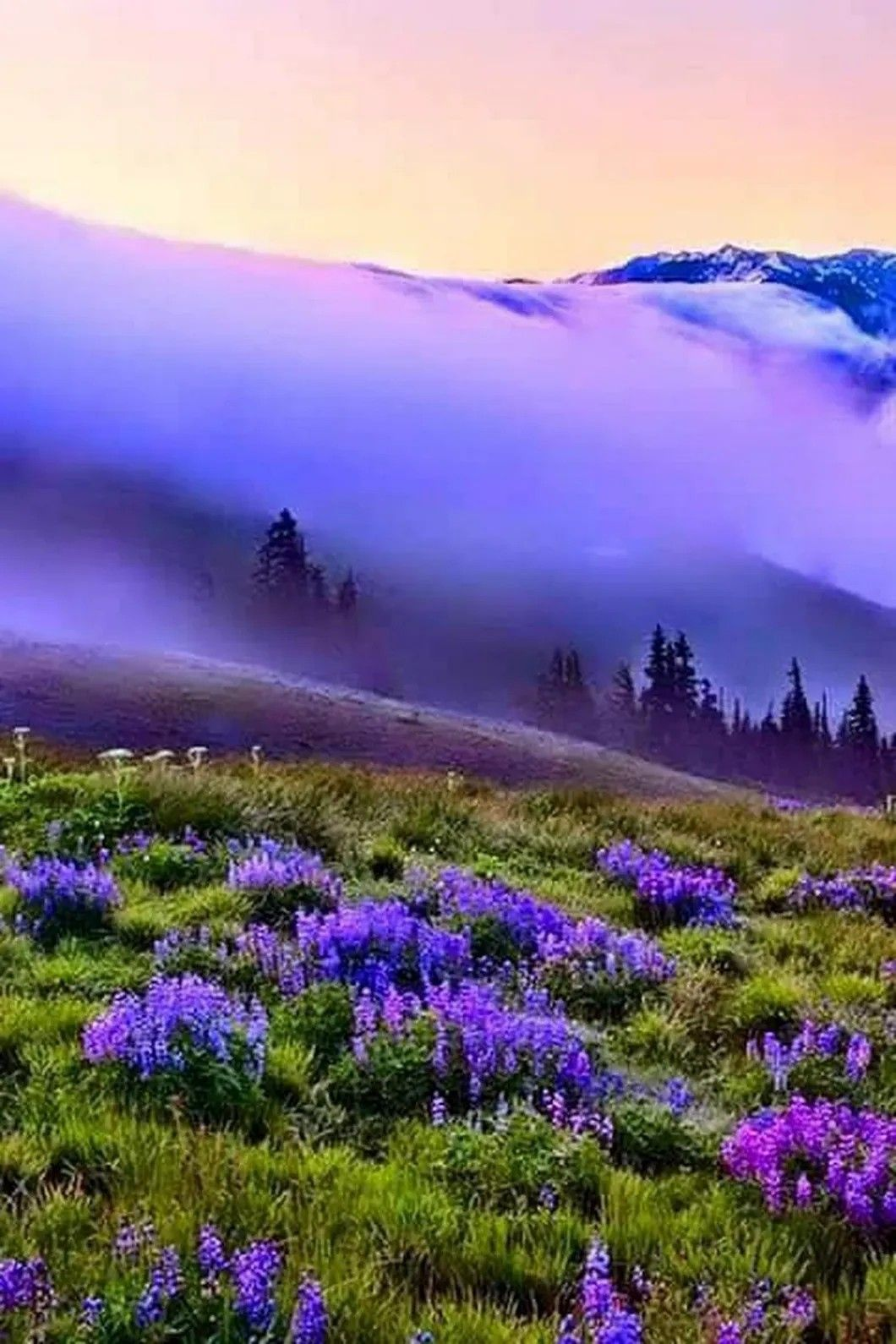 Fantastic Totally Free Purple Flowers Landscaping Suggestions In 2020 Beautiful Nature Beautiful Landscapes Nature Pictures
