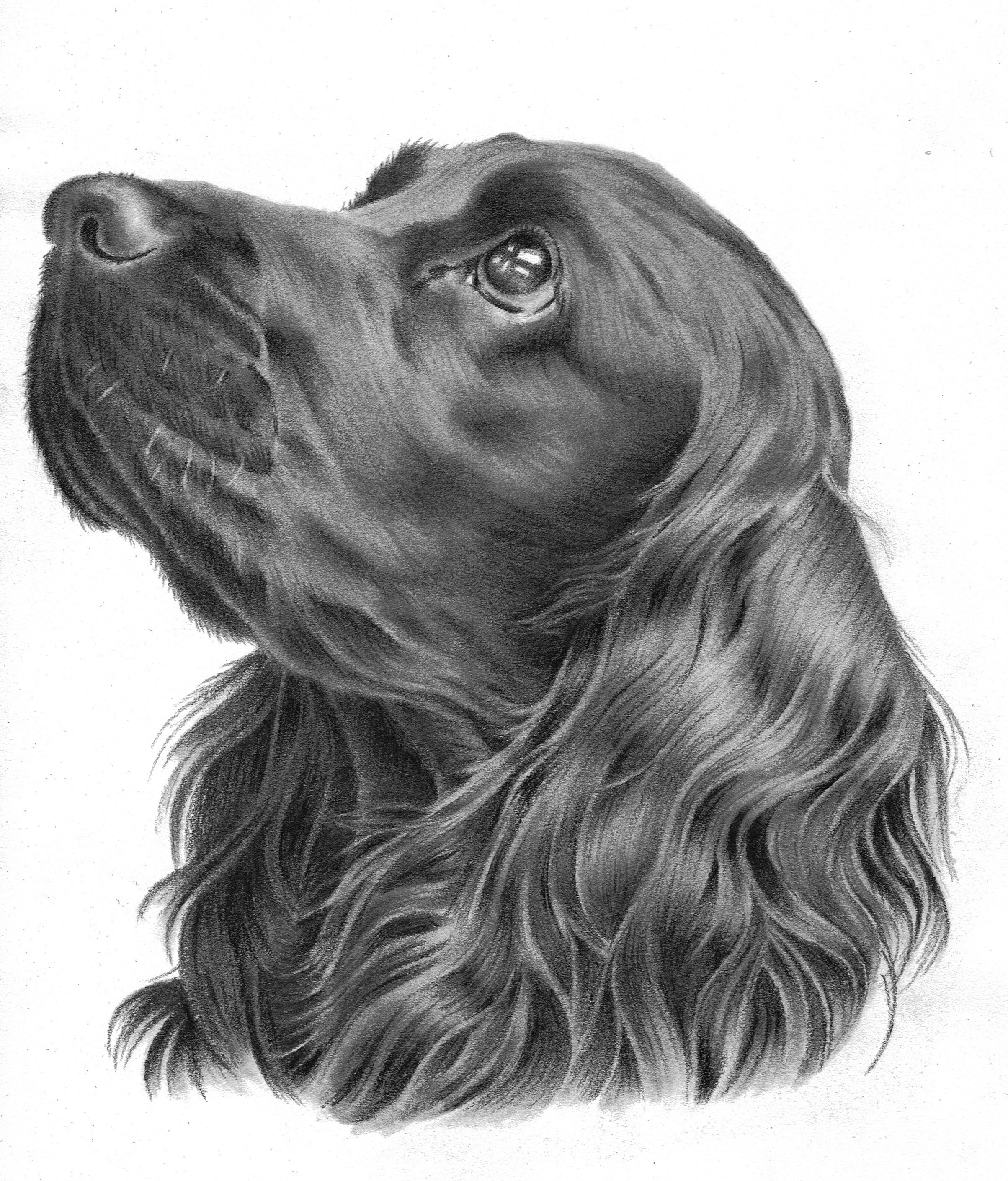 I Drew You Too Simple Spaniel Art Dog Portrait Drawing Animal Drawings