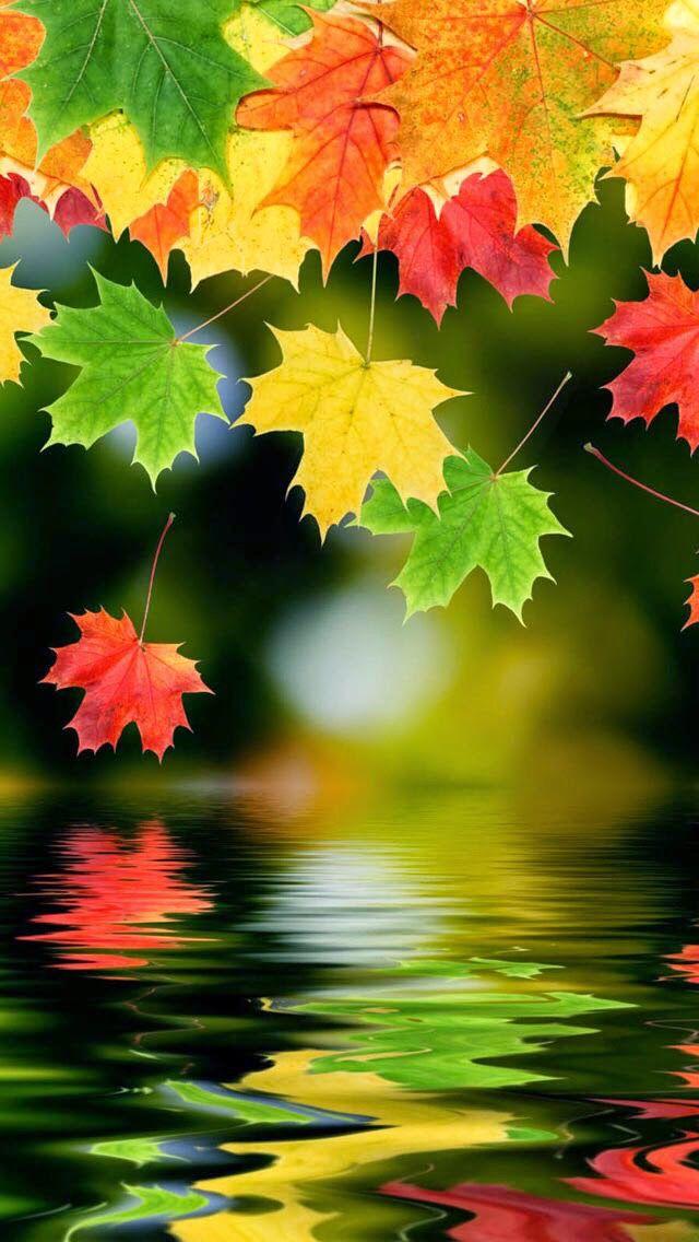 Fall Leaves Hd Iphone Wallpaper Pejzazhi