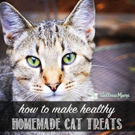 Homemade Cat Treats Pets, Cat breeds