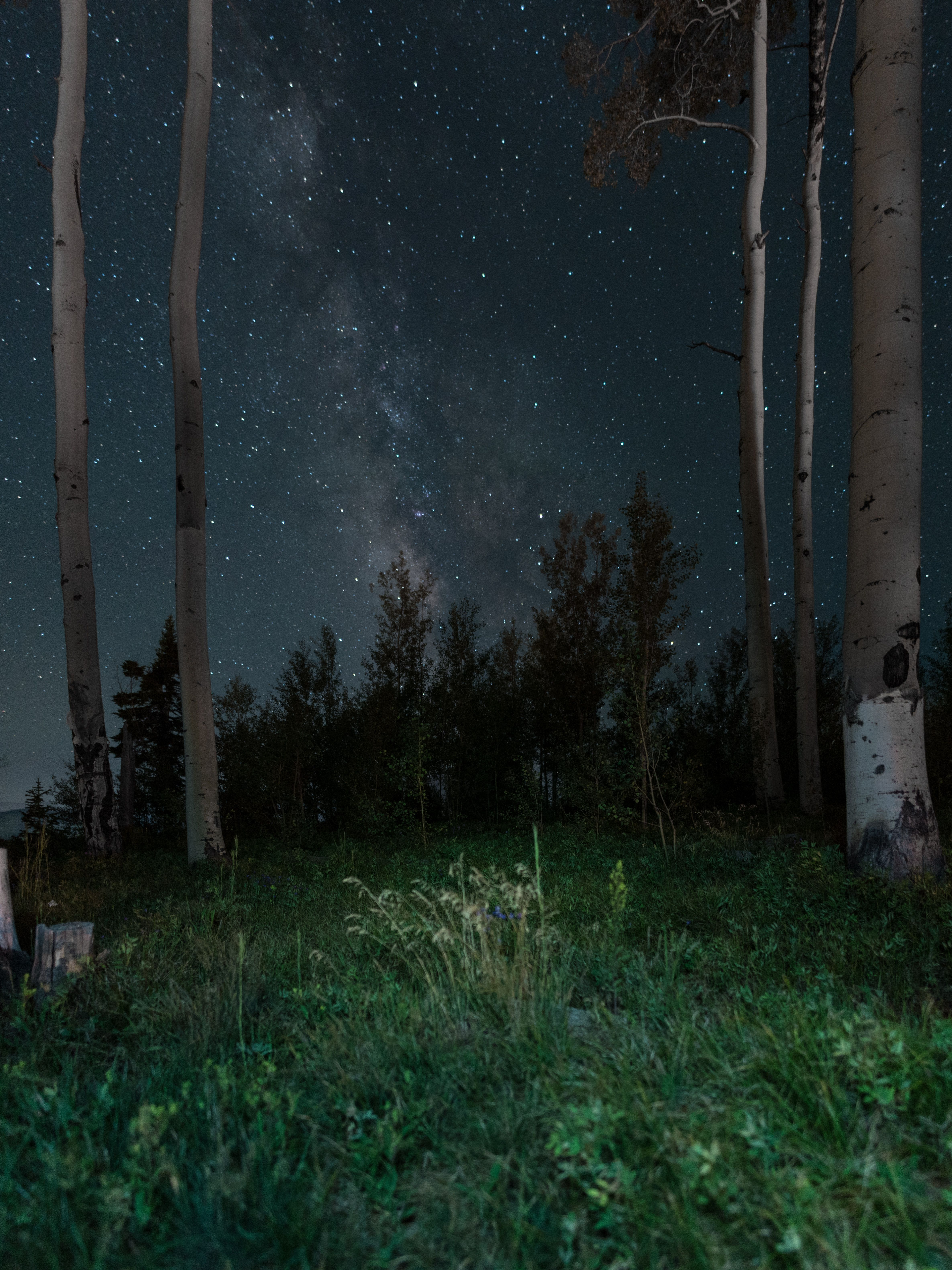 Rtro Forest Nature Night Nature Is A Temple In Which Living Columns Sometimes Emit Confused Words Man Approaches It Thro Grey Skies Sky Photography Nature