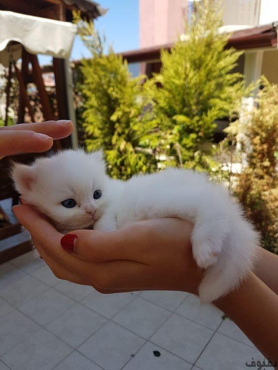 صور قطط صغيرة أجمل صور القطط الصغيرة في غاية الجمال بفبوف Cute Animals Cute Baby Animals Cute Funny Animals