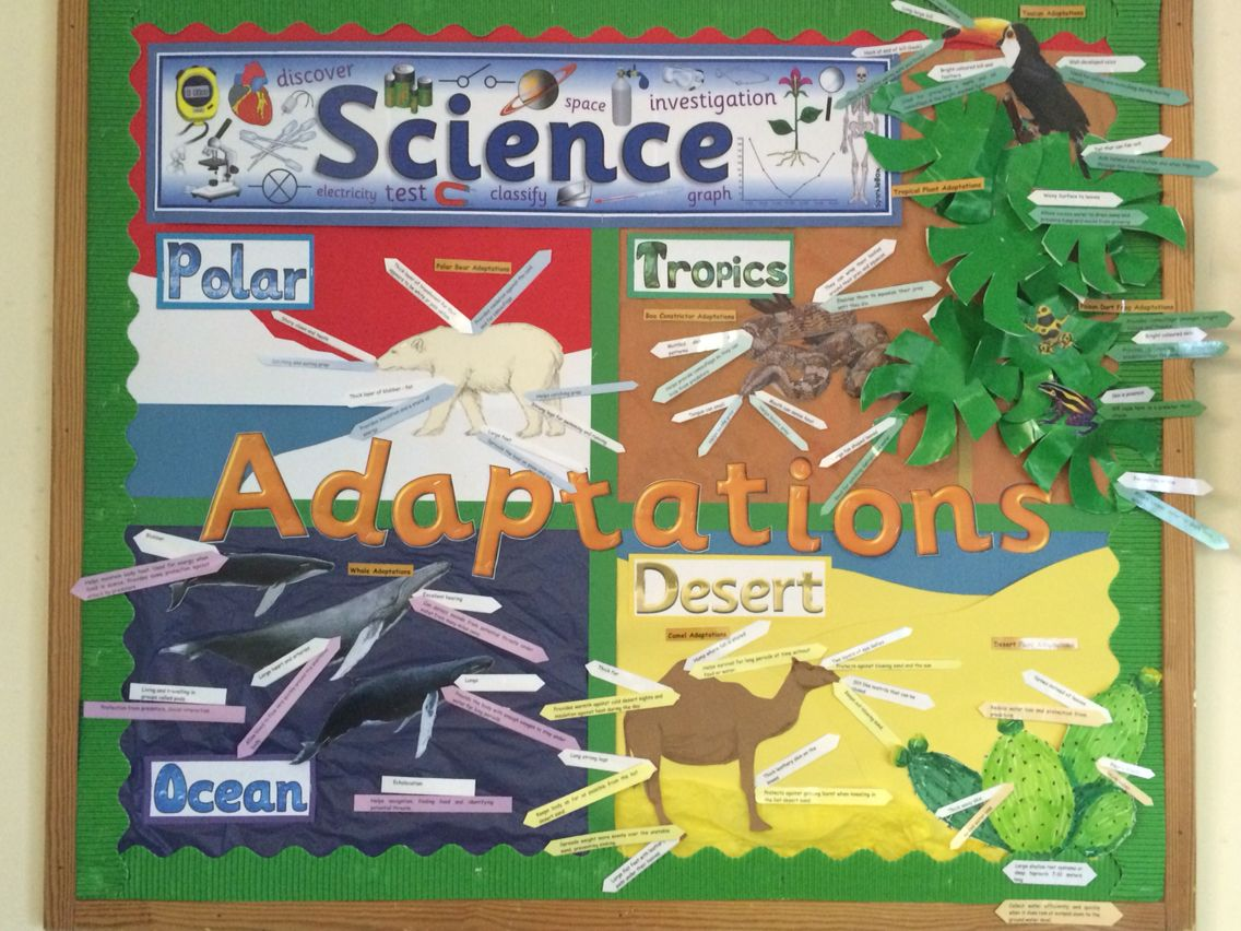 Science Adaptations Interactive Display Features Four Different Habitats With Animals And Plants Classroom Displays Ks2 Science Display Interactive Display