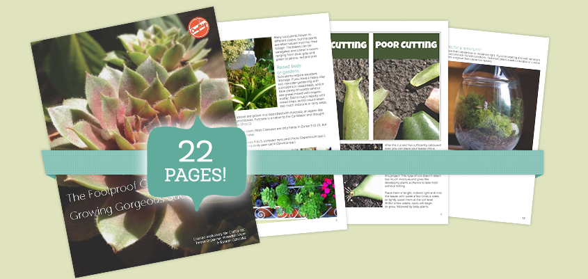 Foolproof Succulent Success Get Your Free Pdf Guide Growing Succulents Succulents Garden Succulents