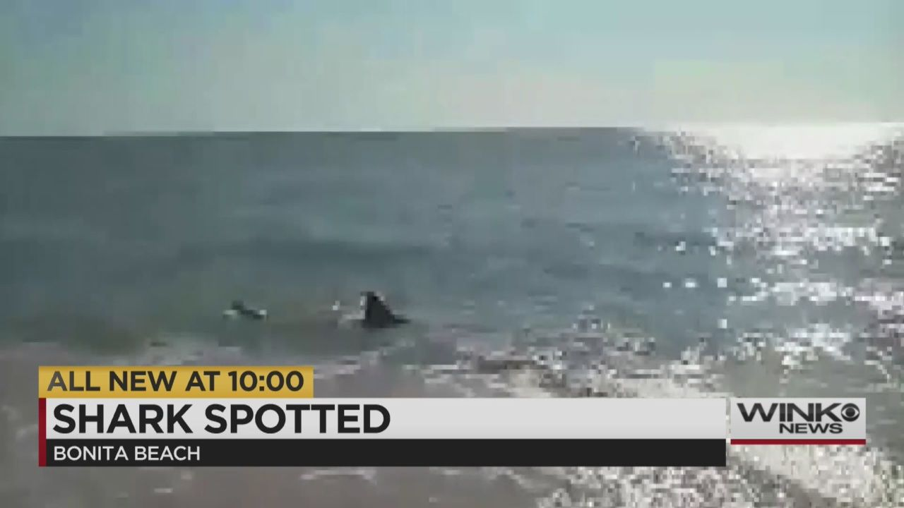 A family jumped out of the water to capture video of what they thought to be a dolphin; it turned out to be a shark.