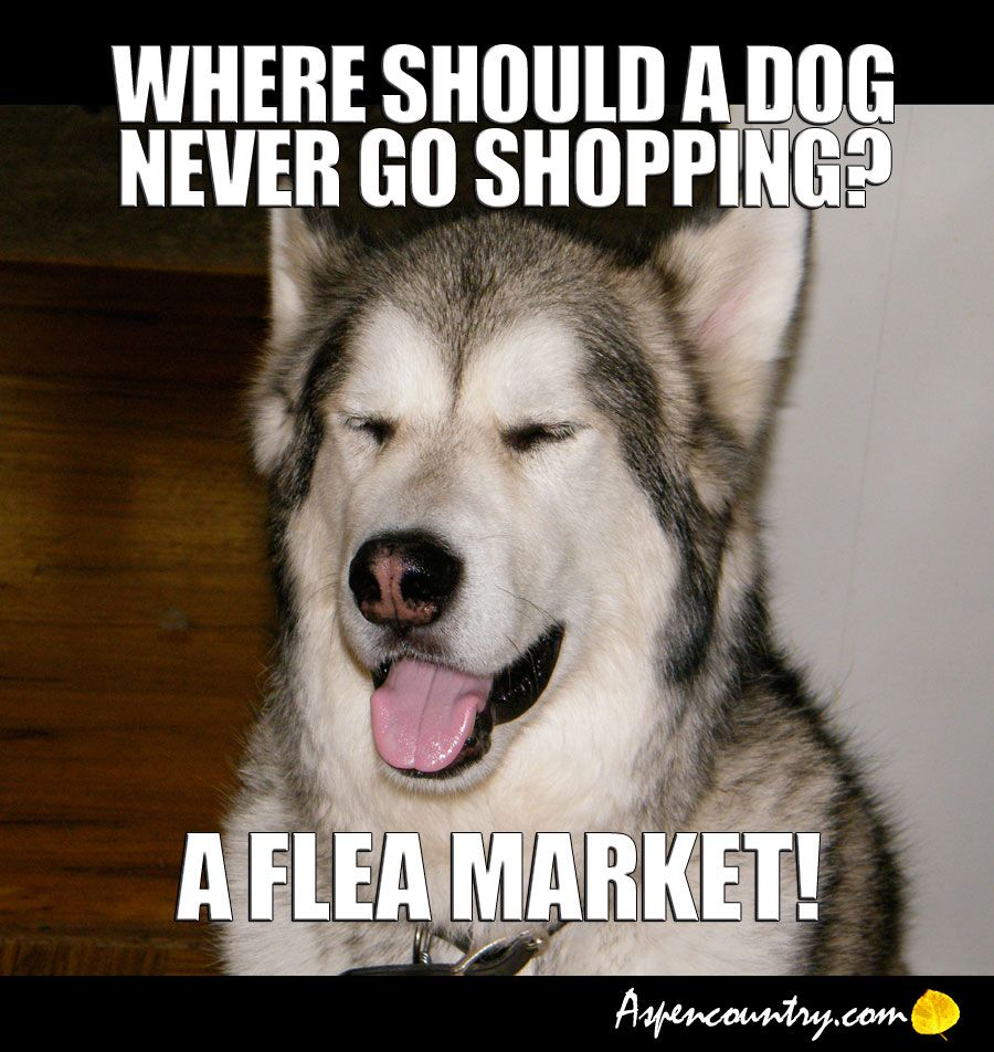 Funny Easygoing Dog Joke Q Where Should A Dog Never Go Shopping