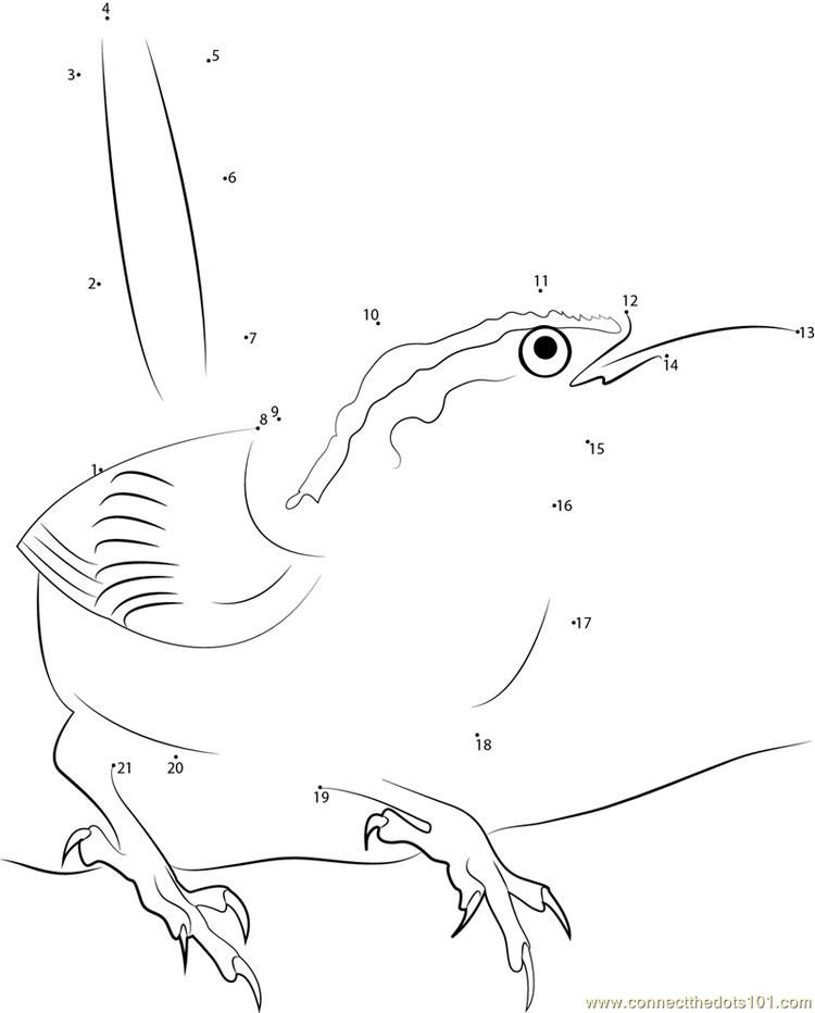 Carolina State Bird Connect Dots In 2020 Pokemon Coloring Pages