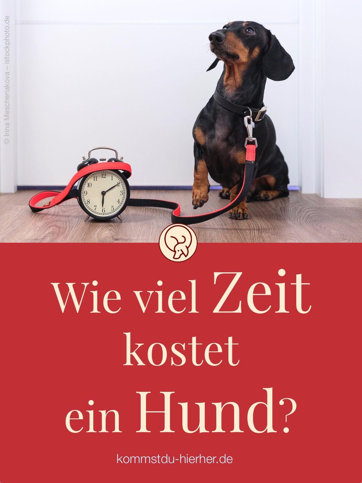 Wie viel Zeit kostet ein Hund Hunde welpen, Hunde und