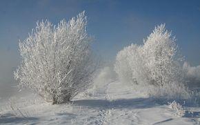 природа, деревья, снег, зима
