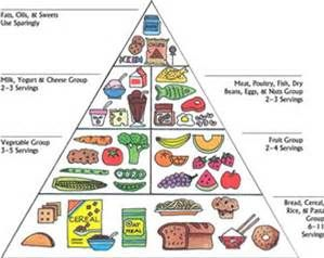 graphic regarding Food Pyramid Printable called Printable Diabetic Food items Pyramid - Bing pics Cathey s