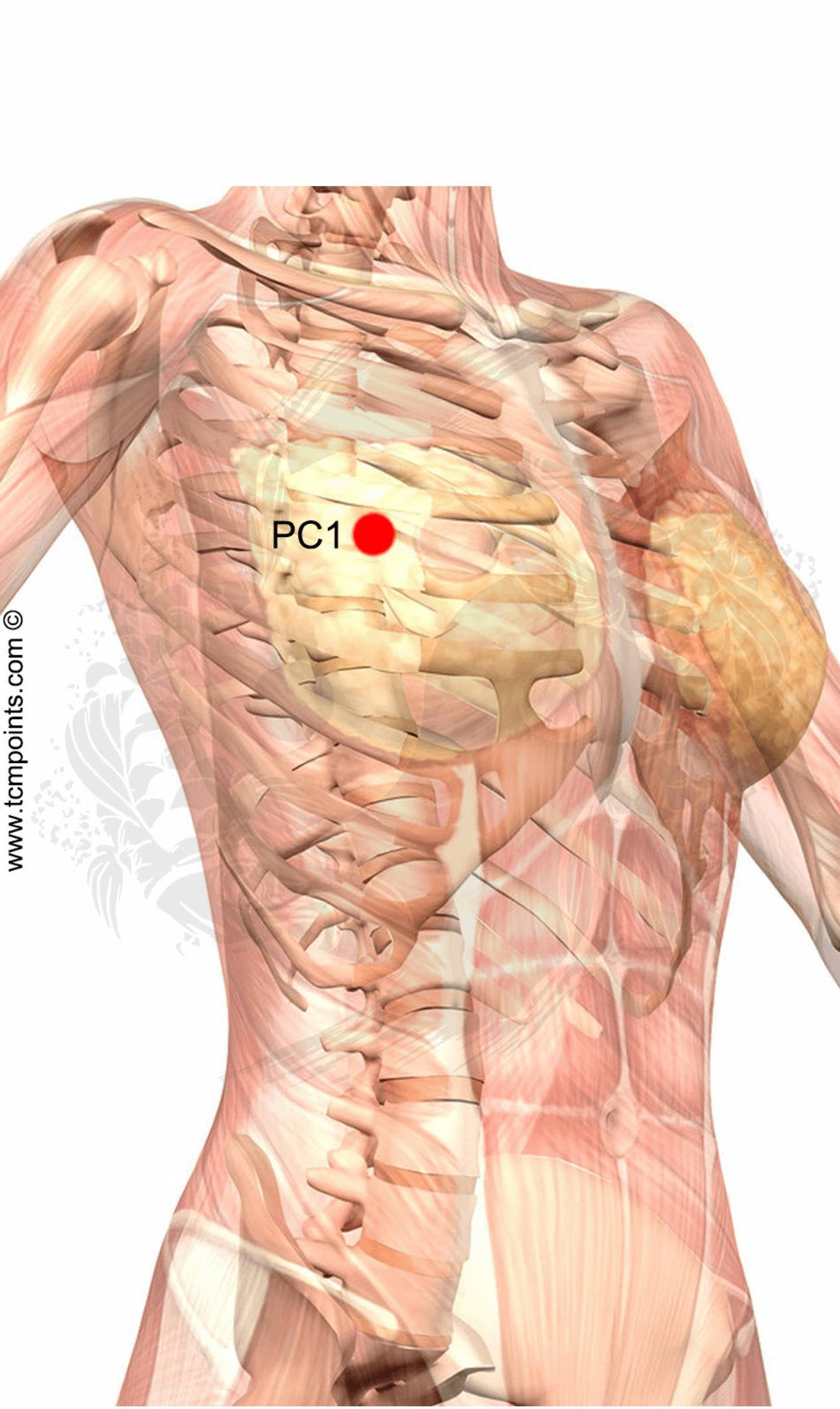PC1--puntos-de-acupuntura.png | Abeja | Pinterest | Puntos de ...