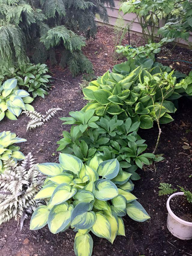 Splashes of Spring in Pennsylvania | Fine Gardening