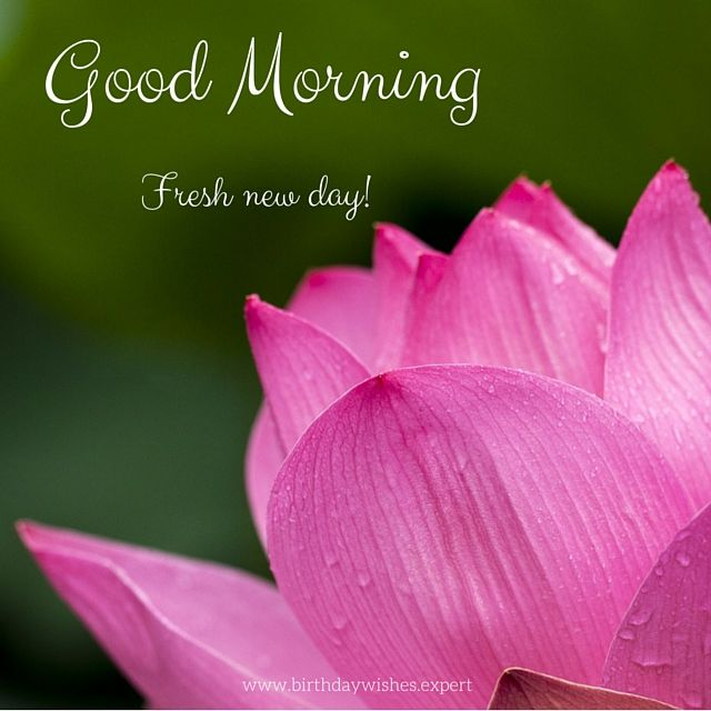 Good Morning Wishes With Beautiful Flowers Images : Good morning images with the most beautiful flowers