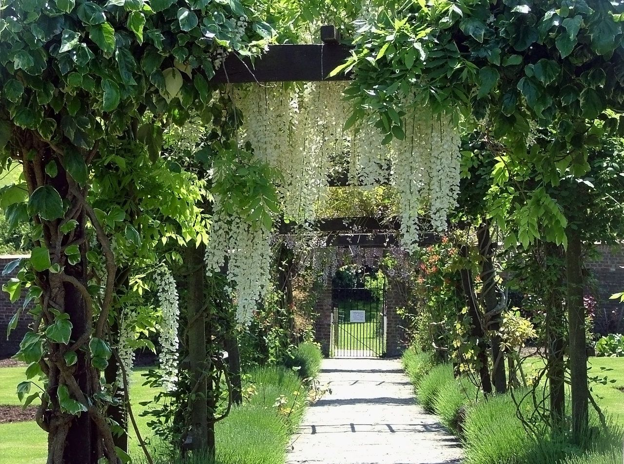 Pergola Glycine Pergola With White Wisteria By Aegiandyad On Deviantart