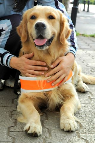 He Loves His Job Beautiful Dog Breeds Most Beautiful Dog Breeds Dogs