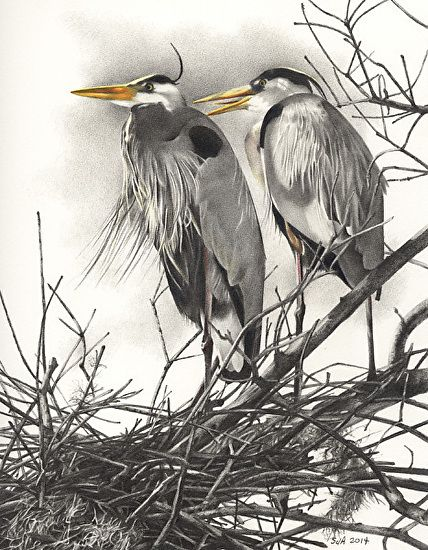 """Rookery Pair by Sue deLearie Adair Colored and Graphite Pencils ~ 9"""" x 7"""""""